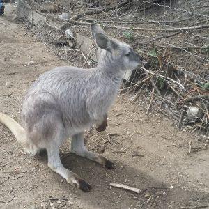 kangaroo-creek-farm