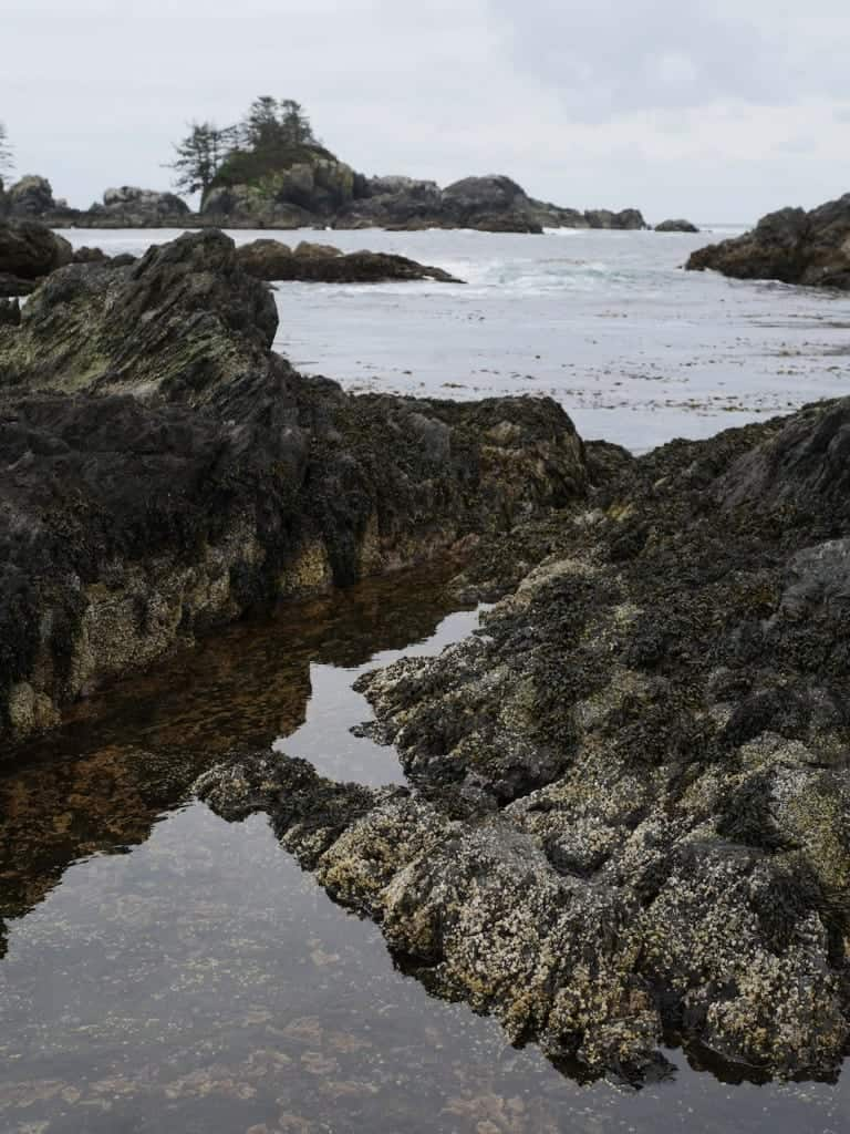 This is what you arrive to. Tidal pools teeming with small wildlife like crabs and tiny fishes.