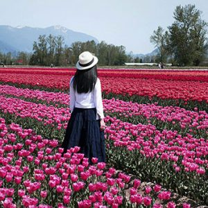 Chilliwack Tulips of the Valley Festival - The Prettiest Sight I Ever Did See
